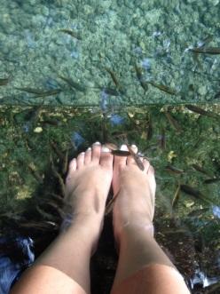 Centuries-Old Balete Tree Fish Spa
