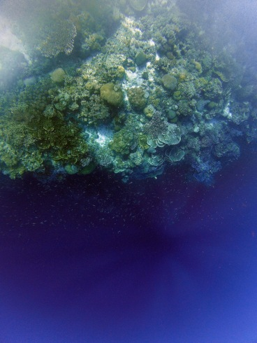 Skindiving at Balicasag Island, Bohol